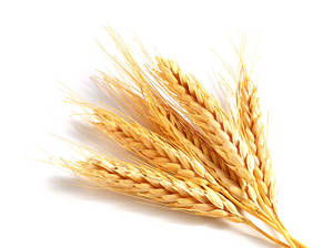 agricultural market information system wheat